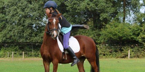 lo.horsewoman-1781972_1920